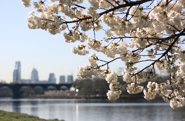 Blooms on the Schuylkill