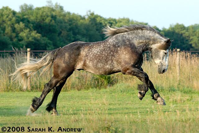 Болезни лошадей.Часть 2