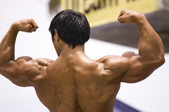 arm, back, male, man, muscle, limb, human body, bodybuilder, physical fitness, bodybuilding,