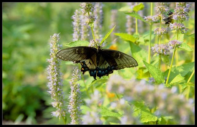 Dsbg Aug10 22 Flickr Photo Sharing