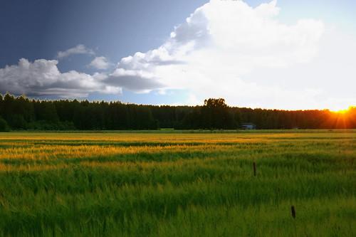 sunset sky field barley manipulation