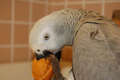Aves - ¿Qué debo alimentar a cuervos / cuervos? - La gran pila del aire libre