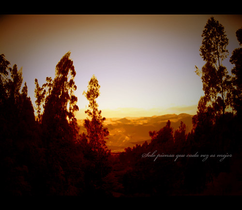 trees forest sunrise landscape atardecer perú bosque pinos ocaso cajamarca otusco