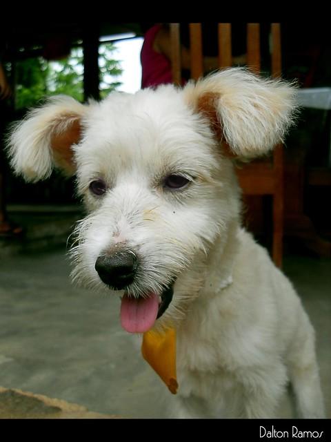 The dog - Nick (EXPLORED)