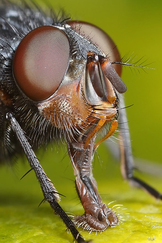 Crop of fly shot