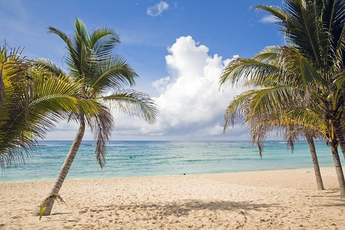 New To You >> Beach Palm Trees Riviera Maya | See Beach Palm Trees - Cryst… | Flickr