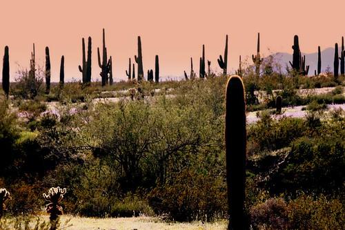 arizona landscape evening geocoded suguaro