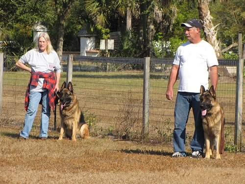 Great Methods To Help Train Your Dog 2