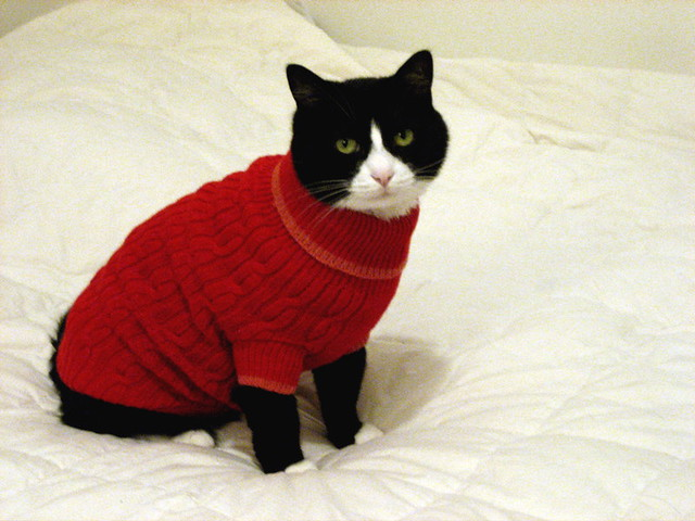 Cats in Sweaters - a gallery on Flickr