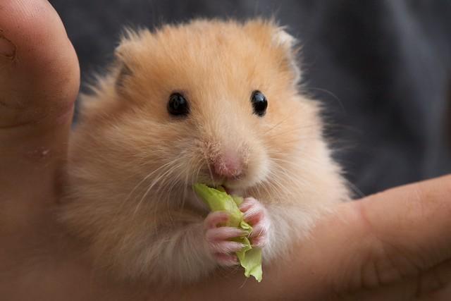 Www Hamster.Com