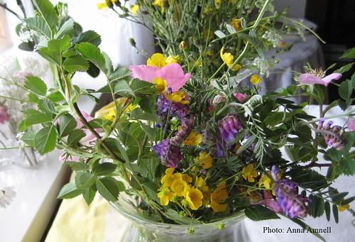 Midsummer wildflowers