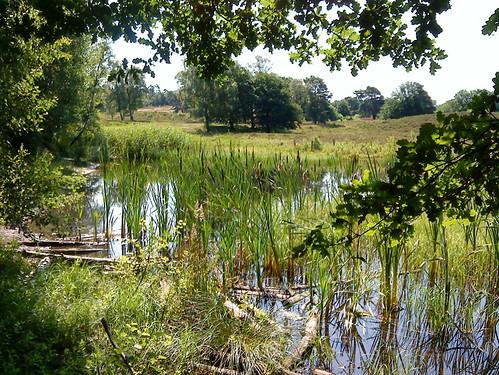 Brunssummerheide Nature Reserve