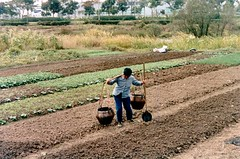 sowing(0.0), vehicle(0.0), plough(0.0), agriculture(1.0), farm(1.0), field(1.0), soil(1.0), farmworker(1.0), crop(1.0), rural area(1.0), plantation(1.0),