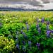 Mother Nature's garden by *trevj (eyemeetsworld.com)