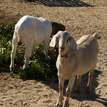Valencia and Ranch 044