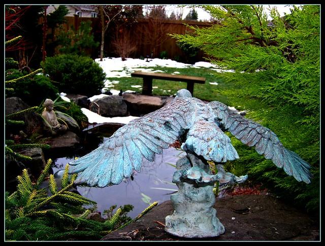 Backyard duck pond flickr photo sharing for Backyard duck pond