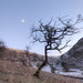 Tree, Dovedale