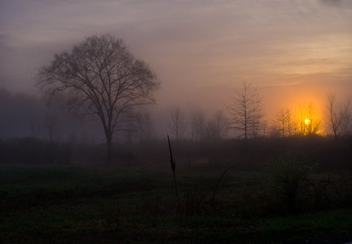 morning trees newyork field grass fog sunrise dawn spring foggy run pinebush
