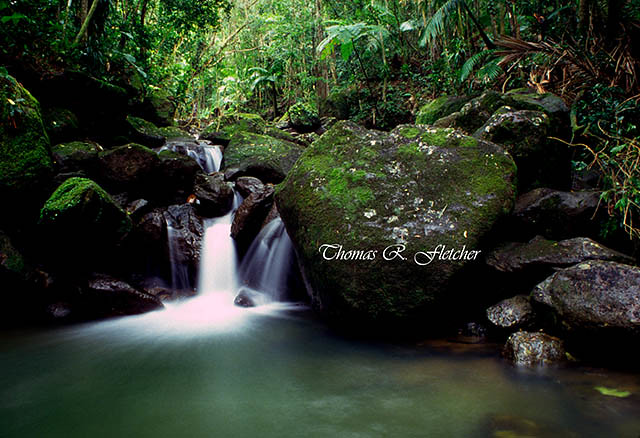 Puerto Rico, El Yunque, Caribbean National Forest, waterfall