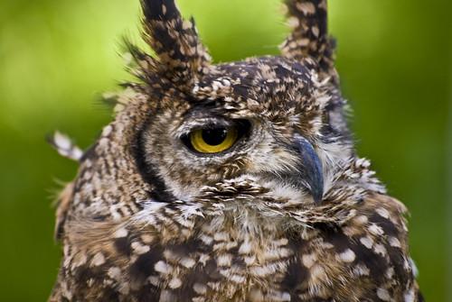 Bakewell Owls 4 Jun 2011