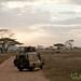 On Safari in the Serengeti - Tanzania