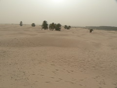 erg, sand, plain, aeolian landform, natural environment, desert, dune, landscape,