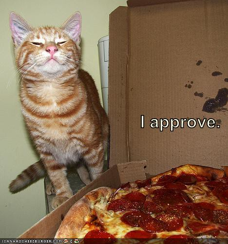 funny-pictures-cat-approves