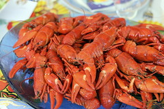 animal, crab boil, seafood boil, crustacean, crayfish, seafood, invertebrate, homarus, food, decapoda, american lobster,