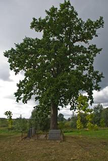 Jewish cemetery, Pilviskiai, Lithuania, 12 Sept. 2008