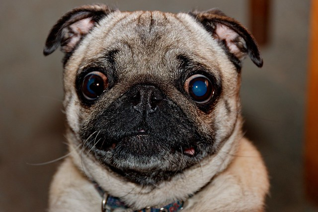 Image Result For Schwarz Dogs