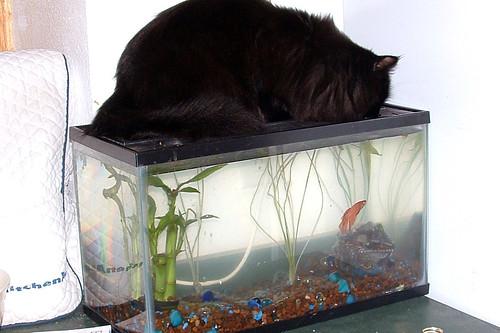 Shadow and his Fish