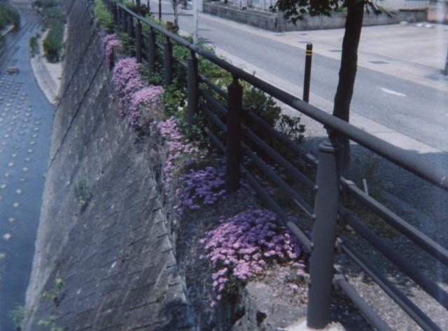 初夏の植田川6(愛知県名東区)