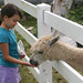 alpaca + carrots = friend