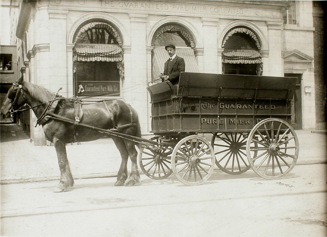 Guaranteed Pure Milk Company delivery wagon No. 36, Montreal, QC, about 1910