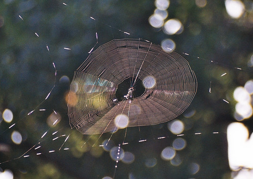 webs seem to catch insects and bokeh really well.