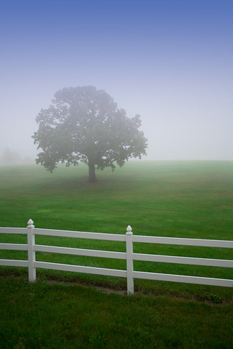 morning white mist tree green grass fog wisconsin rural fence landscape still oak midwest quiet veiled horizon hill gray atmosphere calm september rails slats 2008 solitary wi canonef1740mmf4lusm fitchburg 27mm canoneos5d flickrexplore danecounty jazzmanzem