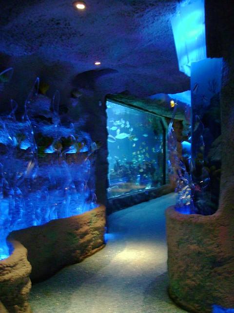 Houston Aquarium Restaurant Flickr Photo Sharing