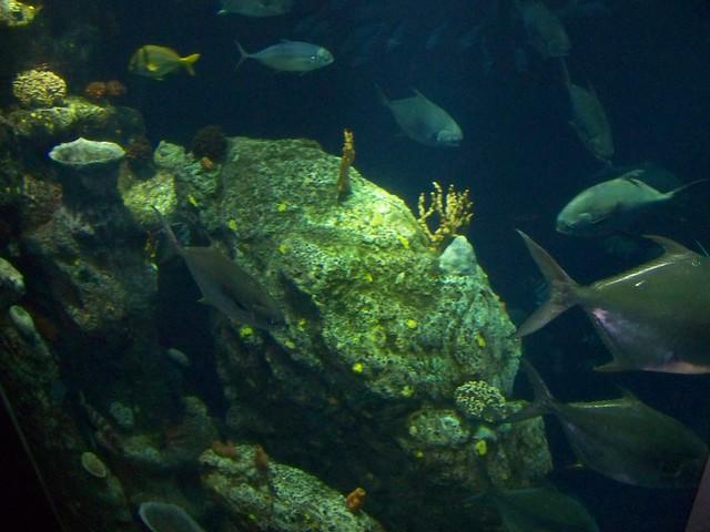 Charleston Aquarium