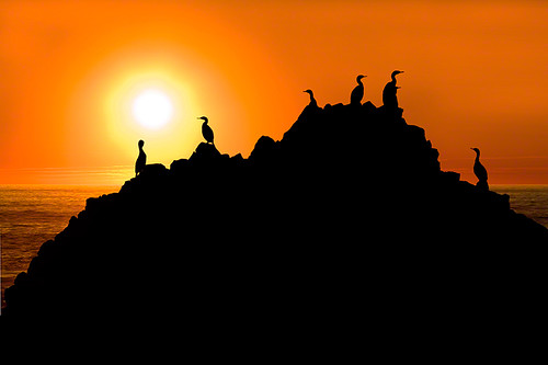 ocean sunset shadow red sea sky orange usa water birds silhouette yellow rock oregon sunrise dawn coast seaside bright dusk background seagull disk backdrop coastline seashore 海岸 日落 海鸟 美国 俄勒冈州 chinaphotoworkshop