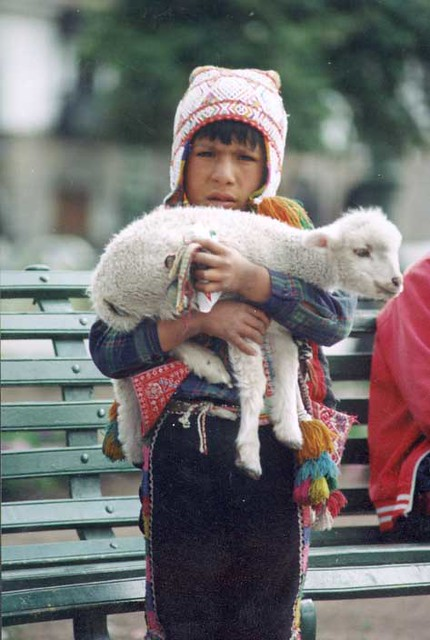Boy with Sheep in Cuzco Peru