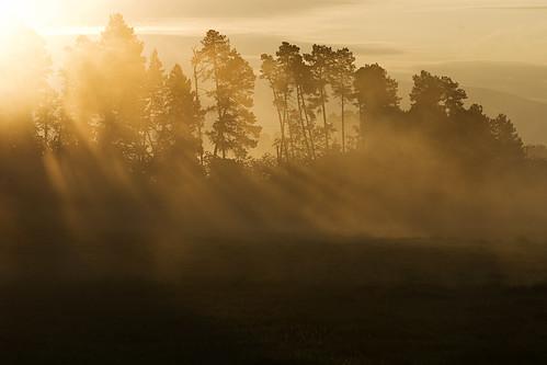 morning trees summer mist silhouette sunrise landscape dawn early herecomesthesun kvdl