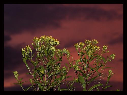 sunset digital austria österreich sonnenuntergang olympus ft dslr e1 zuiko 43 waldviertel oly oesterreich zd fourthirds reichenau 1454mm 1454 olympuse1 fl50 woodquarter zuikodigital freiwald vierdrittel