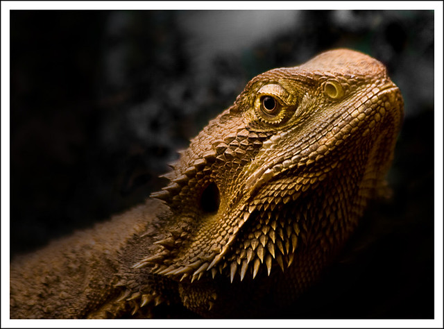 lizard, Canon EOS DIGITAL REBEL XTI, Canon EF 75-300mm f/4-5.6 IS USM