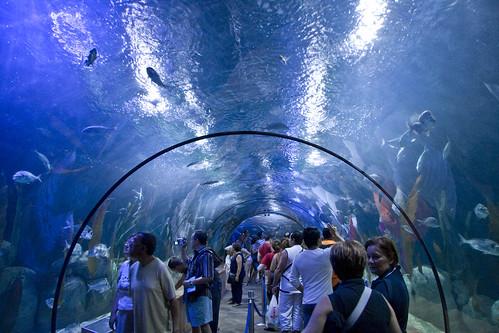 Venezuela atracciones Entradas aquarium valencia