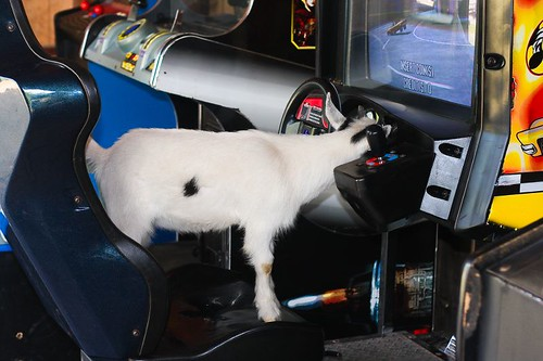 What, you've never seen a goat playing a video game before?