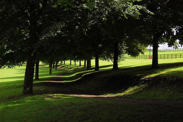 alberi e ombre