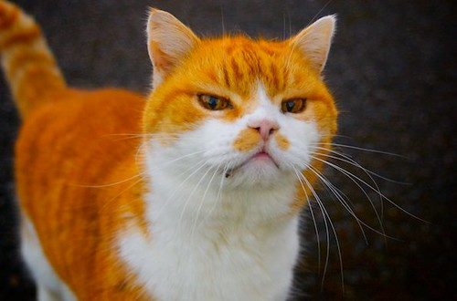 3129807477 86a08cf542 Stupid Cat!