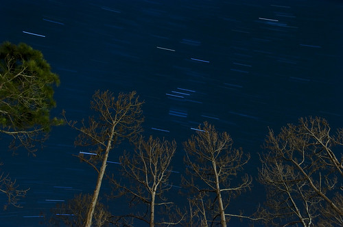 longexposure blue trees light tree night stars time swirl