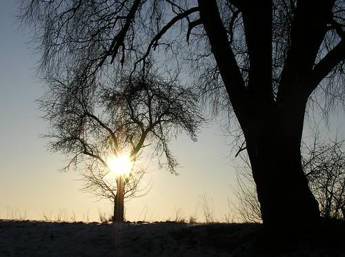 winter sunset two sun tree silhouette germany village dusk himmel thuringia sonne baum zwei baretree sunray schackendorf nackterbaum