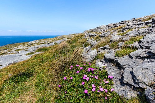 The karst landscape called the Burren, County Clare, Ireland